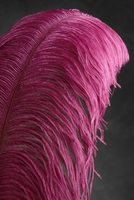 "Feathers Burgundy Ostrich Plumes (25-28"" tall) 1/2 lb"