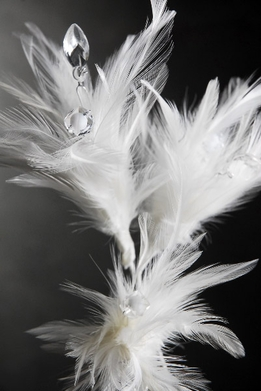 Feathers Crystals & Pearls Stem White 22 in.