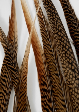 "Feathers Golden Pheasant Side Feathers 25-30"" (12 feathers)"