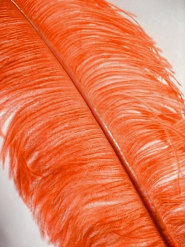 "Feathers Tangerine Orange Highest Quality Male Ostrich Plumes (22""-28"")"