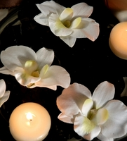 Floating Orchids Cream White (Pack of 6)
