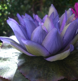 Floating Silk Flowers and Water Hyacinth, Water Lily , Lotus