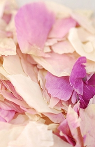 Flower Petals,  Rose Petals,  Orchid Petals - Click to enlarge