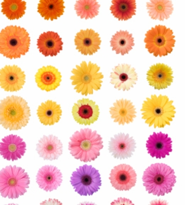 Flowers & Decorations by Color