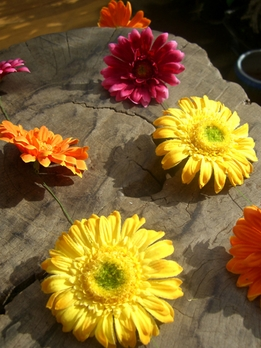 Gerbera Daisy Garlands 5' Mixed Colors 18 flowers