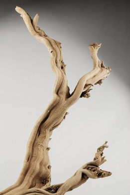 "Ghostwood Branches Sanded (10-14"" long) Natural"