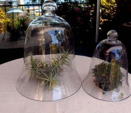 Glass Cloches