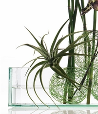 Glass Vases & Centerpiece Containers