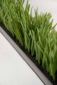Grass Display in Metal Container 25""