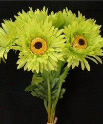 Green Gerbera Daisy Bouquet (12 Pack)