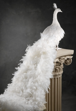 White Artificial Peacock with Curly Feathers 54in