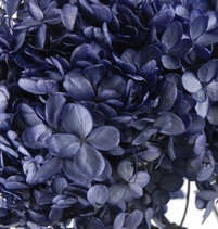 "Hydrangeas Dyed & Preserved 6.5"" Flowers Peacock Blue (2 flowers)"