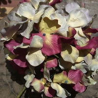 Hydrangeas Parchment Burgundy, Blue Grey & Yellow