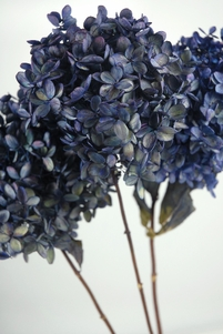 Hydrangeas Preserved Large Blue Violet Flowers (3 stems)