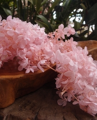 "Hydrangeas Preserved Natural 4.5"" Soft Pink (2 flowers)"