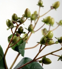 Hypericum Berries Green Artificial
