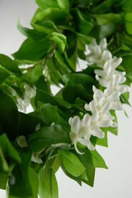 Jasmine Flowers & Stephanotis  - Wedding Flowers