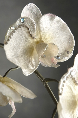 Jeweled White Orchids