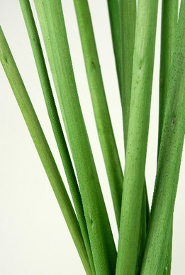 "Jute Sticks Green 28"" (10 pieces/bunch )"