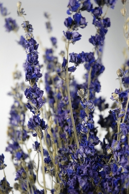Larkspur Flowers Purple Air Dried (15 stems)