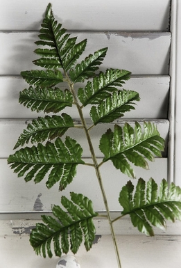 Leather Fern Leaf Green 22in