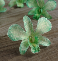 Mint Green Orchids Preserved Flowers (30 flowers)