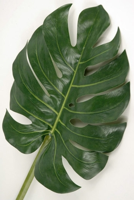 Monstera Leaves Artificial