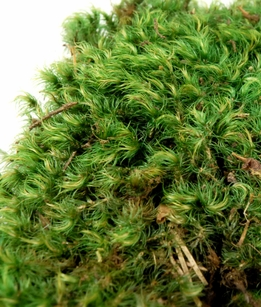 Mood Moss Preserved Green 5lb Box