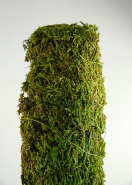 "Moss Covered Poles 18"" x 2"""