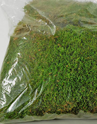 Moss Sheet Preserved 1.1 lbs Superior Quality