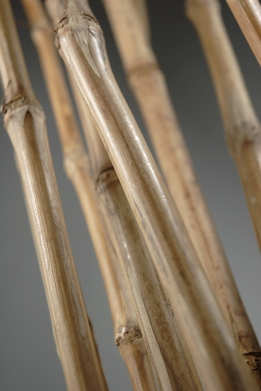 Natural Babala Bamboo Cane 4 Feet (9 pieces)