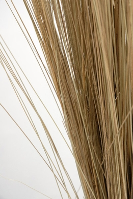 Natural Bright Tall Grass Preserved (35-40 in)