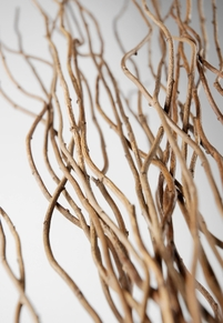 Natural Curly Willow Branches 27-30in (11 branch bundle)