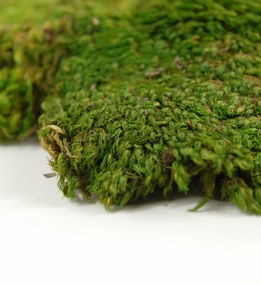Natural Mood Moss 480 cubic inches