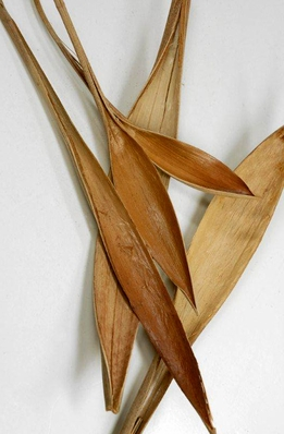 "Natural Palm Paddles(20 pieces) 9-13"" tall"