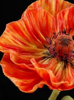 "Natural Touch 25"" Poppy Orange & Yellow (flower 5"" width) Flowers"