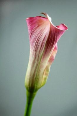 Natural Touch Calla Lily Flowers Fuchsia Pink