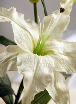 Natural Touch Flowers Casablanca Lily White