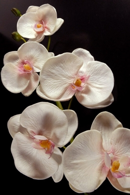 Natural Touch Flowers Orchids White Phaleanopsis Orchids