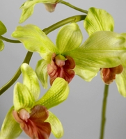 Natural Touch Orchids Green Dendrobium Orchid