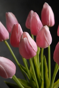 Natural Touch Pink Tulips (12 flowers)