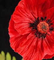 Natural Touch Red Poppy Flowers