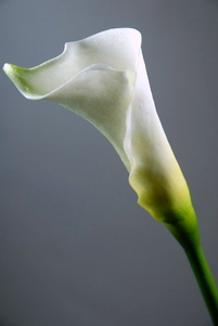 Natural Touch White Calla Lilies