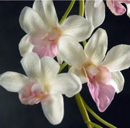 Natural Touch White & Pink Dendrobium Orchids (7 flowers) Flowers