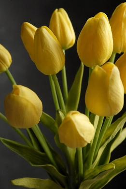 Natural Touch Yellow Tulips (12 flowers)