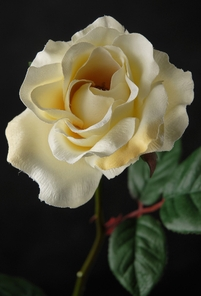 One Dozen Silk Roses Cream White