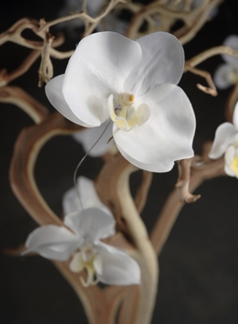 Silk Orchid Garland 5ft with 10 Cream White Orchids