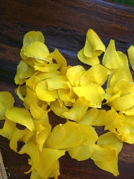Orchid Petals Yellow