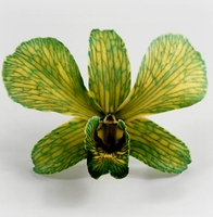 "Orchids Preserved 3"" Brittany Green & Yellow (30 flowers)"
