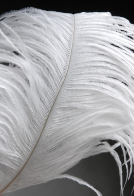 "Ostrich Feathers White Wing Tips 9-12"" (1/2 lb- 150 feathers )"